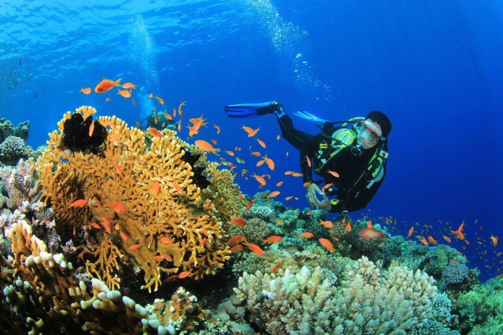 scuba Barbados