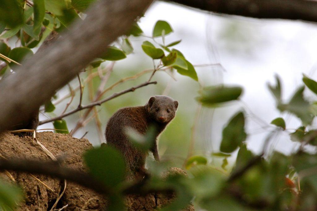 Krugar National Park (South Africa)