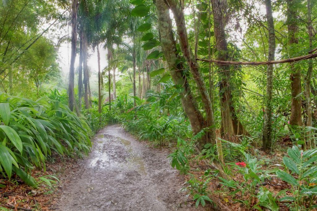 Mystic Mountain, Rainforest Adventures