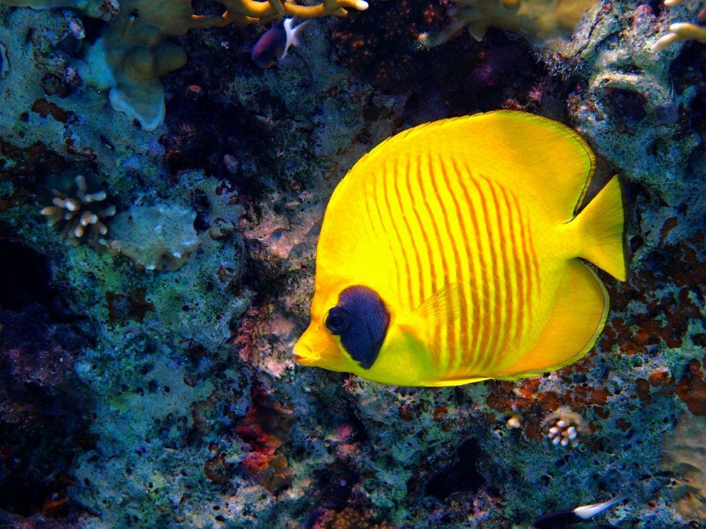 Tubbataha Reef, Philippines