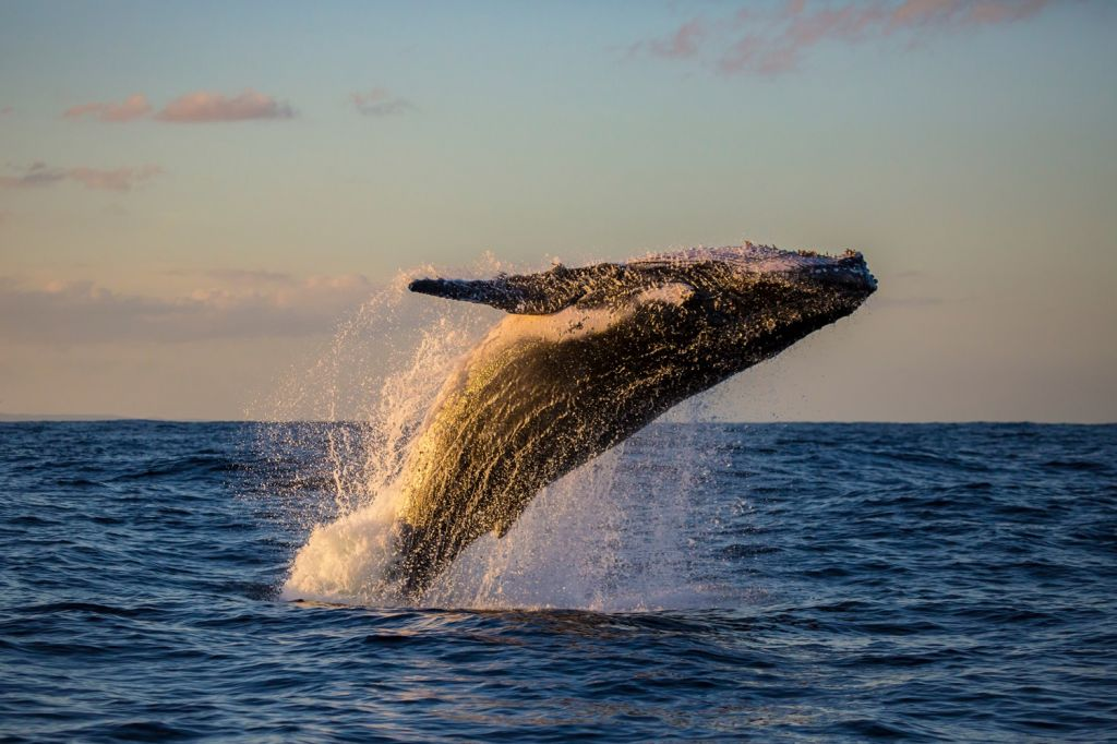 whale watching Colombia