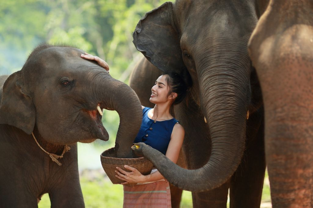 Play with the elephants