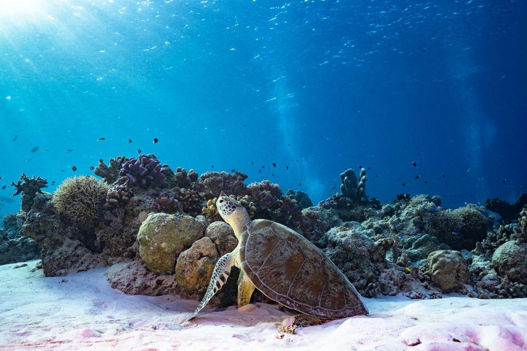 Tubbataha Reef National Marine Park