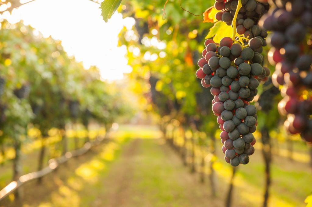 wine Lefkada