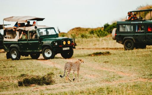 All You Need To Know About African Safari Hunting