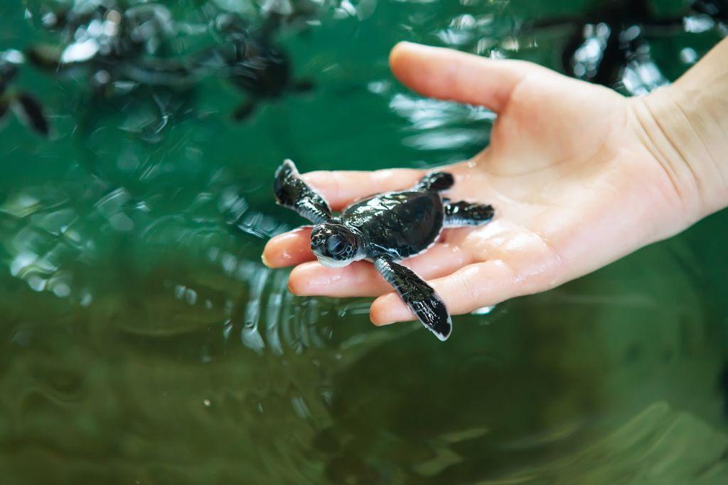 Visit the Turtle Conservation - Sanur