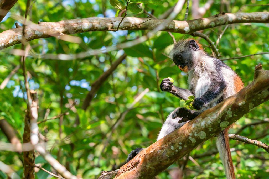 Jozani Forest - Zanzibar