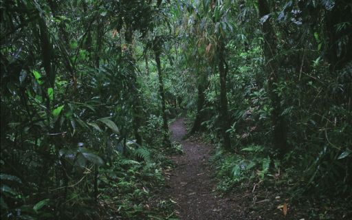 Rainforest adventures in Costa Rica