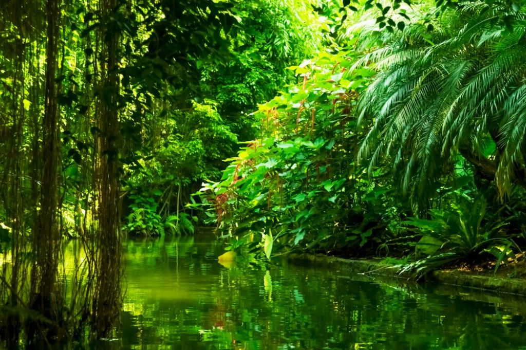 Things you need to know before traveling to a rainforest 3