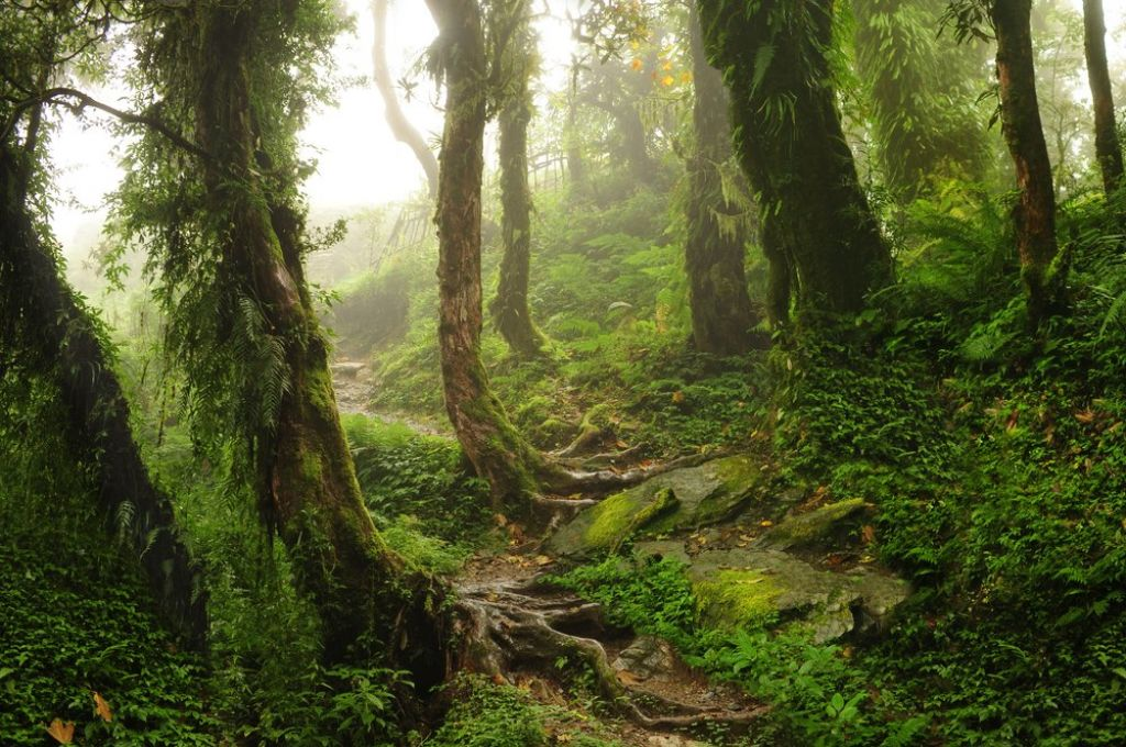 Things you need to know before traveling to a rainforest 5