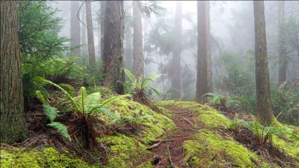 top tips for a rainforest tour 1