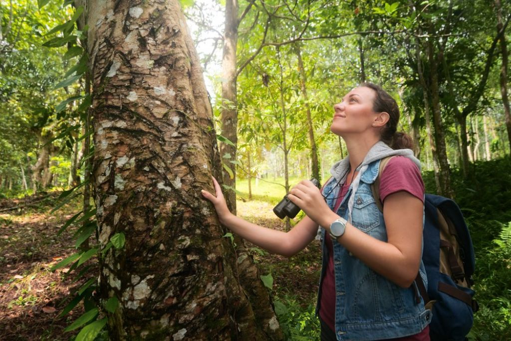 top tips for a rainforest tour 2