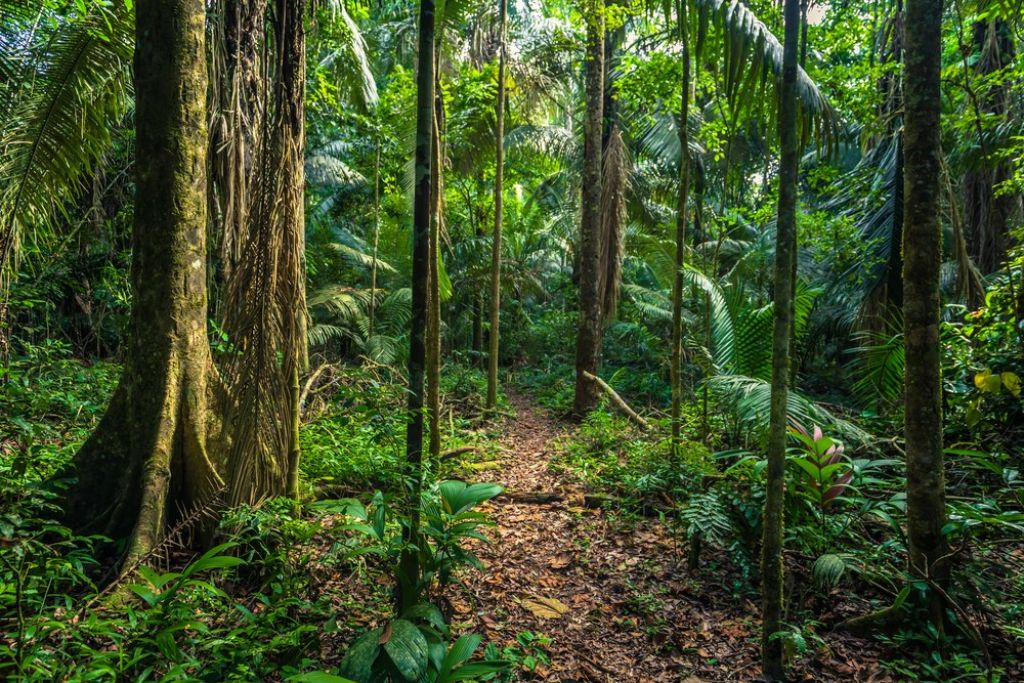 top tips for a rainforest tour 3