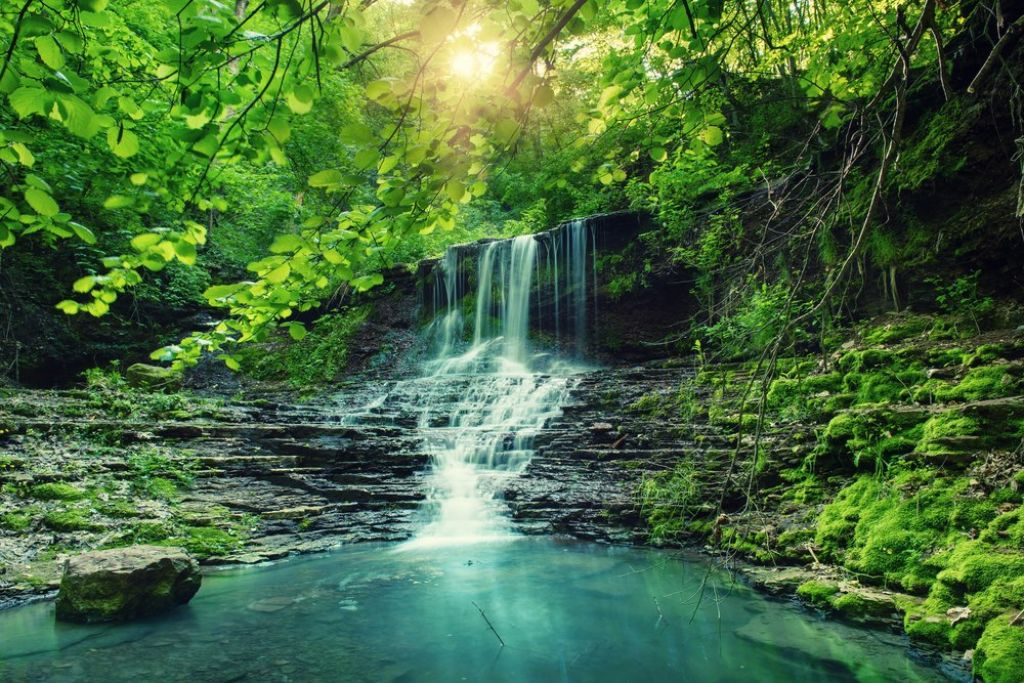 top tips for a rainforest tour 4