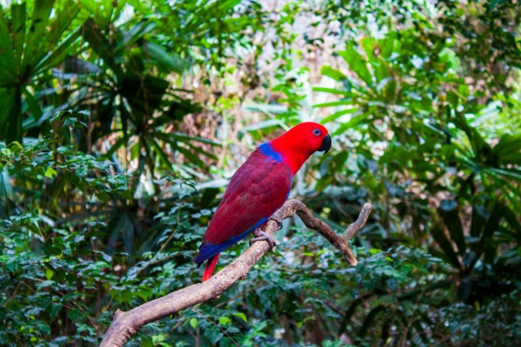 top tips for a rainforest tour 5