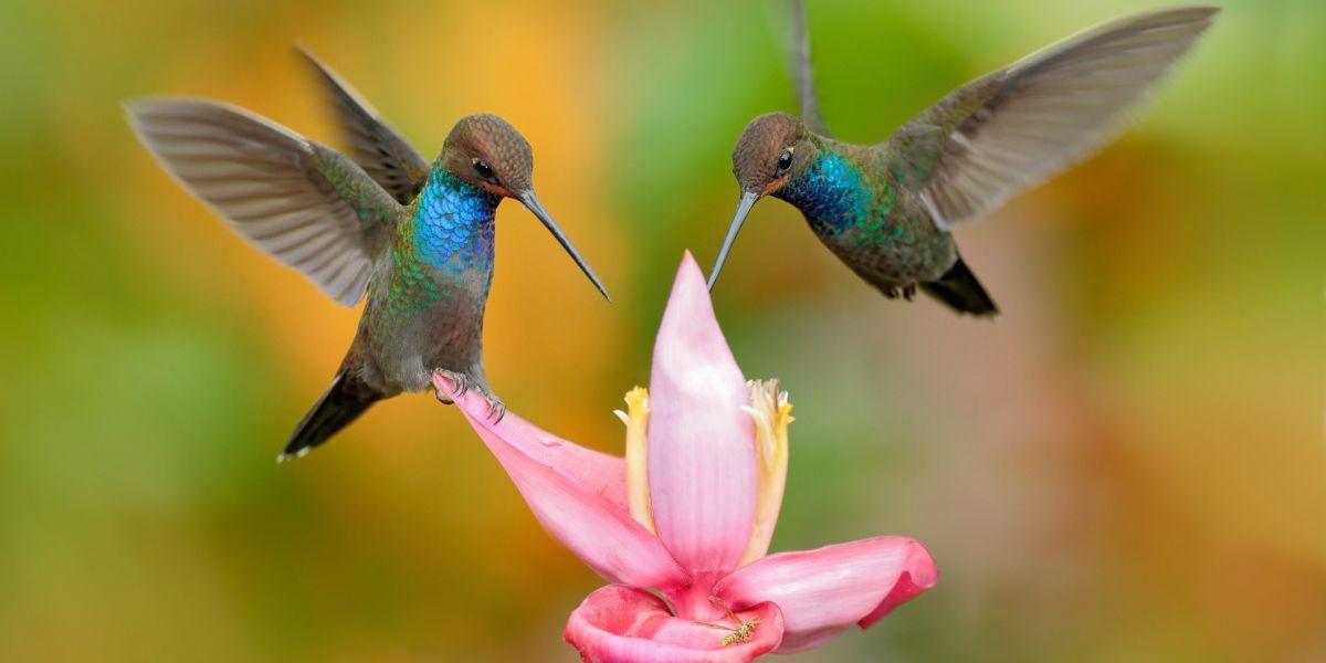 Animals found in rainforest