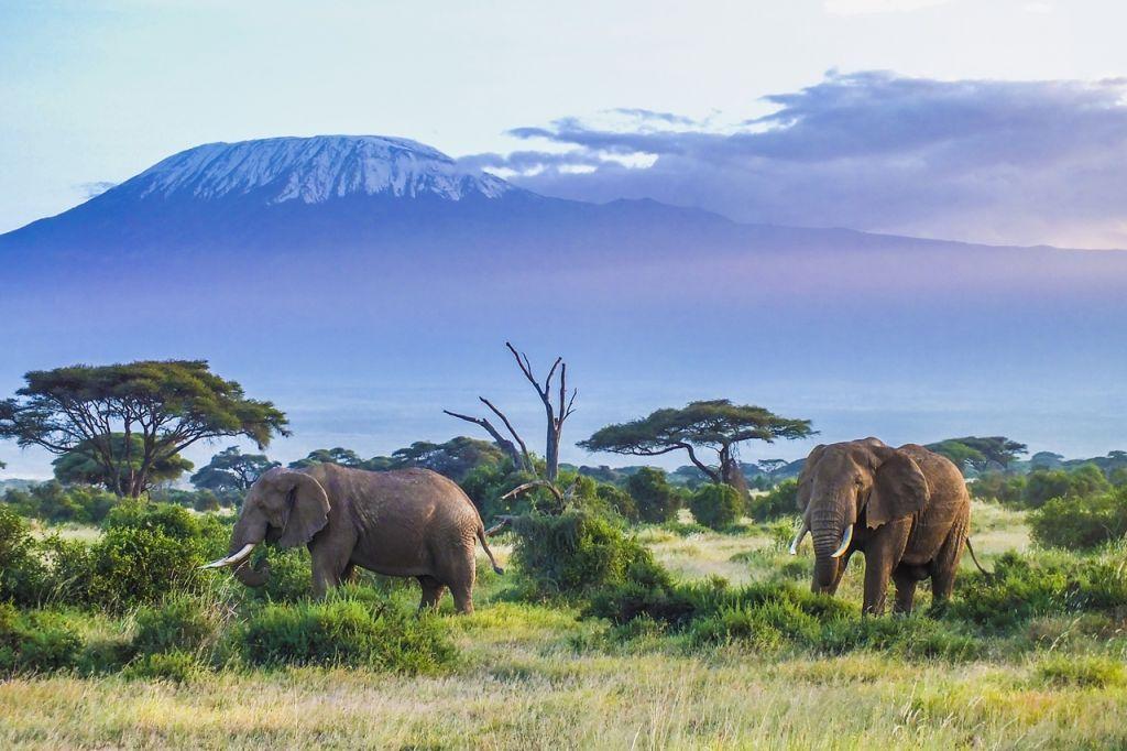 Amboseli National Park Africa