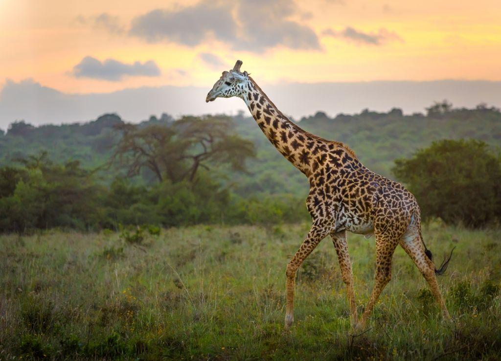 Nairobi National Park Africa