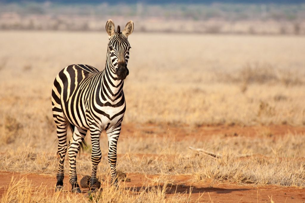 Tsavo National Park Africa