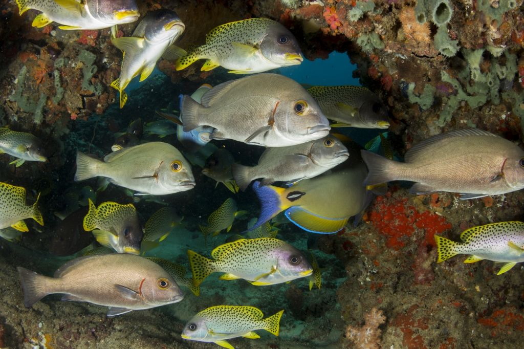 coral reefs and marine life Mozambique