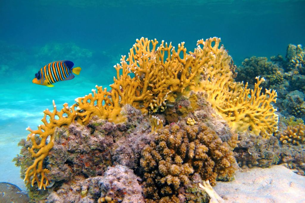 What makes Zanzibar an excellent diving and snorkelling spot