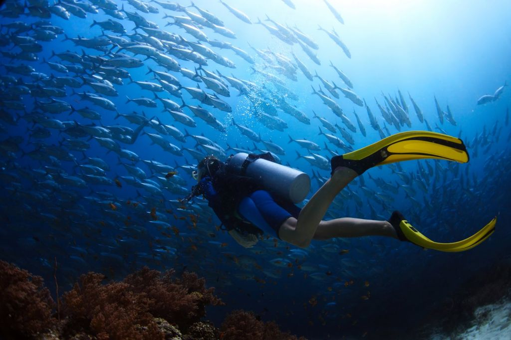 1 Tulum is the Ideal Destination for Scuba Diving