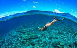 Best Snorkelling Spots In The Caribbean