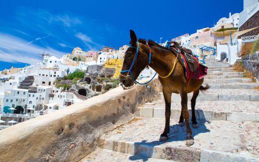 Santorini donkey ride