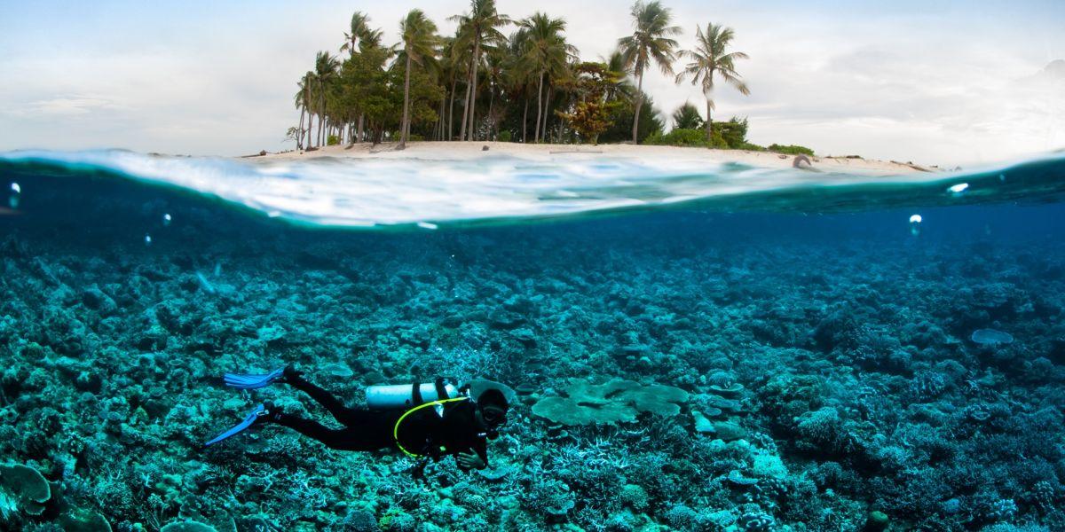 scuba diving diver below coconut island bali lombok sulawesi