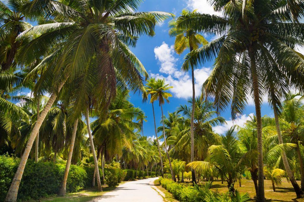 coconut plantation in La Digue Seychelles