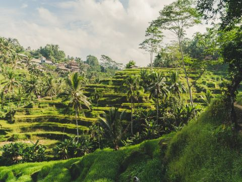 Landscape of Ubud